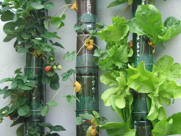 Saiba como fazer uma horta caseira reutilizando garrafas PET – VivoVerde e81ca999e593f