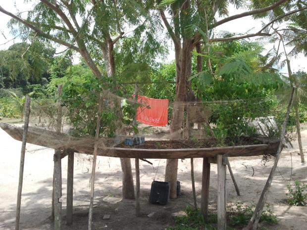 Reutilização de embarcação para o cultivo de hortaliças.
