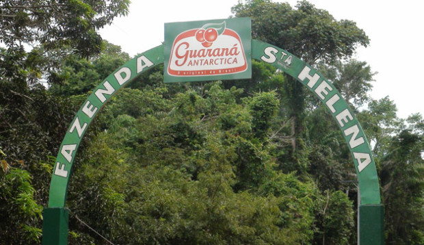 guarana8