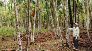 size_300_16_9_palmeiras-acai