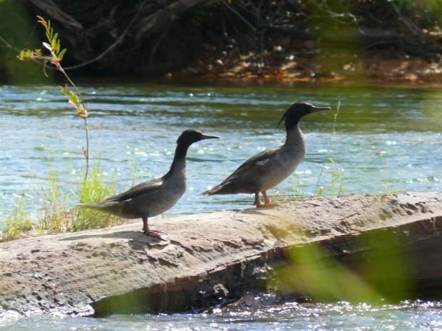 Intenção é proteger período de reprodução das aves e nascimento de filhotes