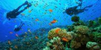 mergulho_corais