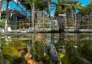 Circuito de Sustentabilidade #Fiat – Água e efluentes